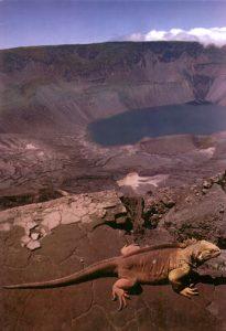 fernandina-isla-volcan