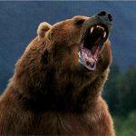 Documental – El Misterio de las islas perdidas. La isla de los osos grizzly