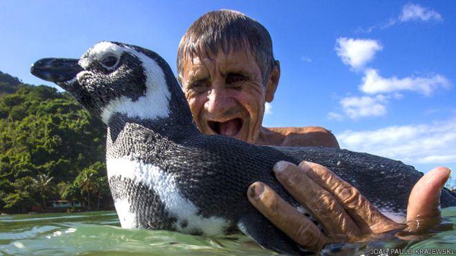 pinguino dindim
