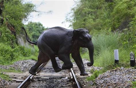 elefante cruzando vias tren india