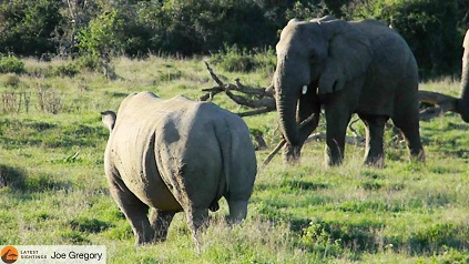 elefante rinoceronte palo