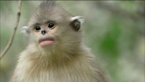 Los Monos de Shangri-La