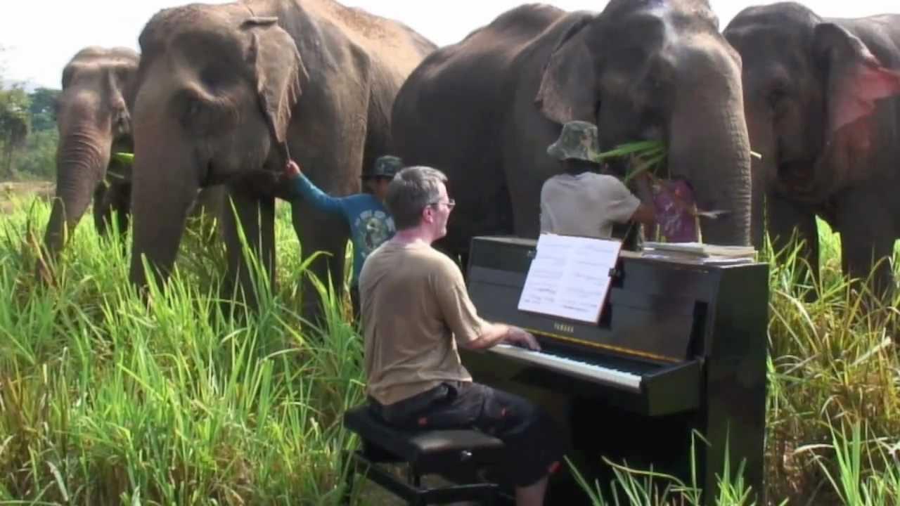Concierto con Beethoven para elefantes