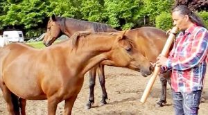concierto flauta caballos