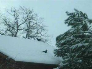cuervo nieve tejado