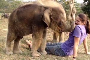elefante buscando nariz mujer