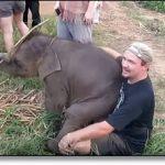 Al joven elefante le gustan las caricias