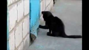 gato rescata perrito