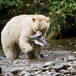 Documental – Canadá salvaje: El borde de hielo
