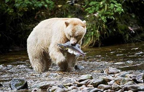 oso canada