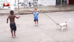 perro jugando comba