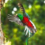 Documental – Costa Rica, el arca de la Naturaleza