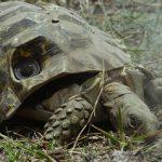 Elefantes machacan una tortuga espia