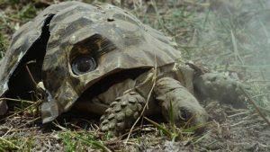 tortuga espia rota