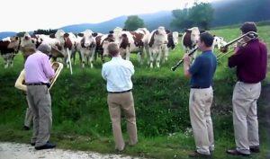 vacas jazz
