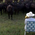 Concierto de trombón para vacas