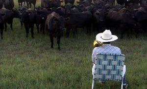 vacas trombon concierto