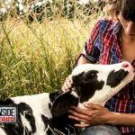 Vaca rescatada se comporta como una mascota