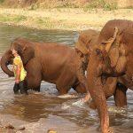 amistad elefantes hombre