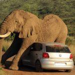 Vídeo con momentos curiosos de animales salvajes