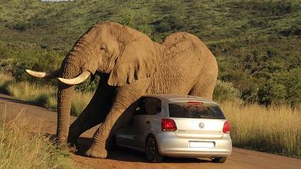 elefante sobre coche