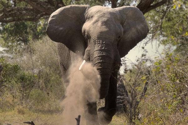 encuentro elefante