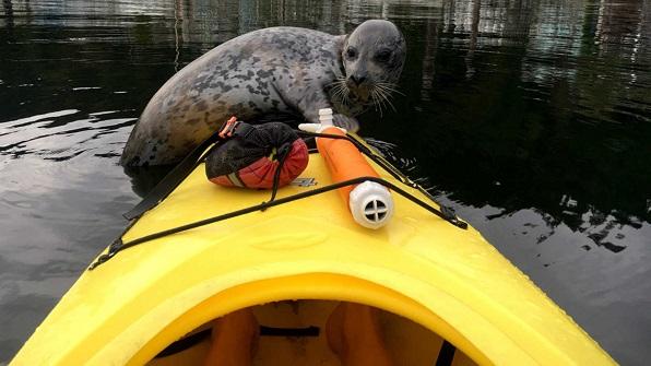 foca kayak