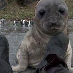 Hombre brutalmente atacado por una foca bebe