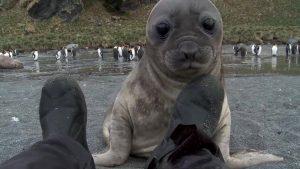 hombre atacado por foca