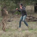Hombre golpea a canguro para salvar a su perro