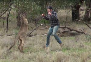 hombre golepando canguro boxeo