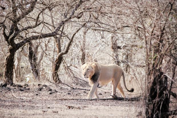 leon india