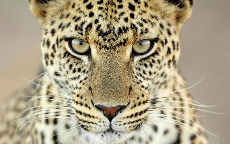 Documental – Los ojos del leopardo