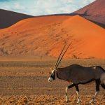 Documental – La fuerza de la vida: El árido Namib