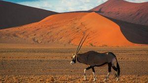 antilope documental La fuerza de la vida El árido Namib