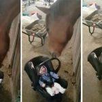 Caballo acunando a un bebe