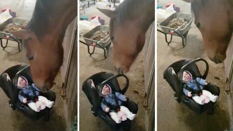 caballo acunando bebe