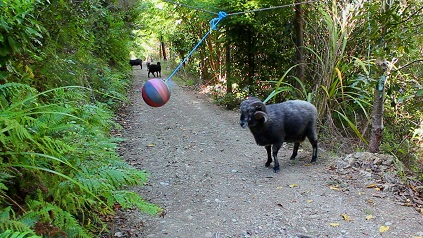 cabra furiosa bola colgante