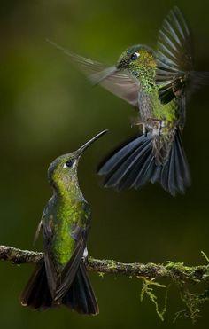 colibri ritual amor