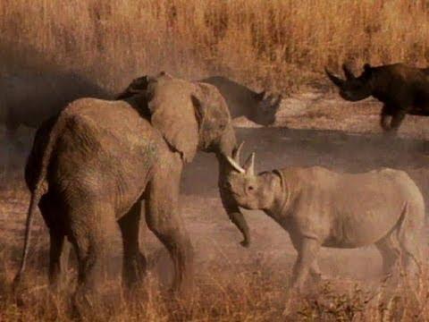 elefante rinoceronte