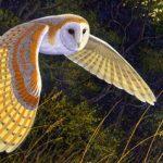 Asi vuelan lechuza, halcon peregrino y ganso