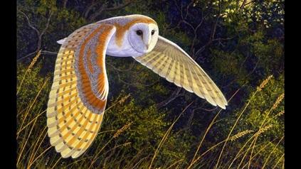 lechuza volando