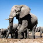 Grandes documentales – Alma de elefante