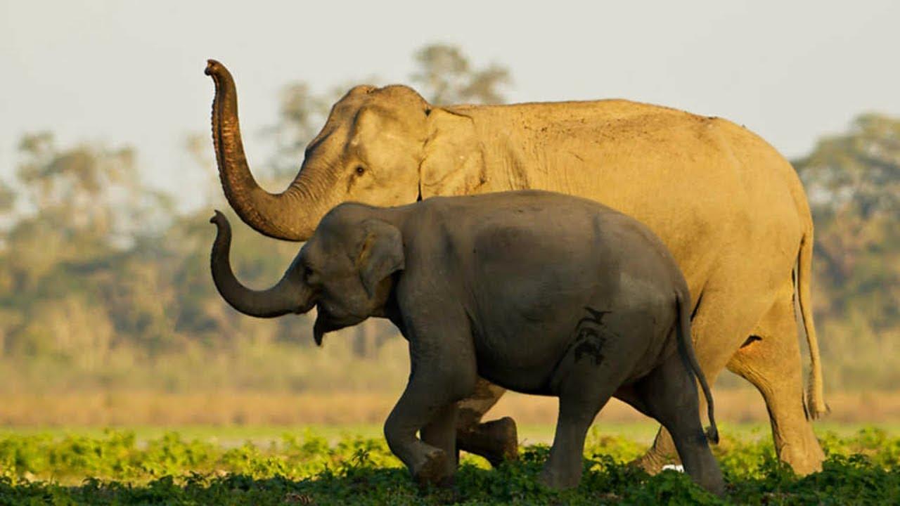 Documental – Imperios del reino animal: Santuarios