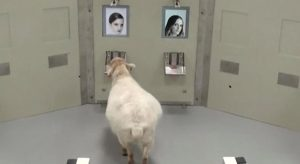 oveja reconoce a emma watson