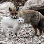 Gato defendiendo su comida ante un zorro