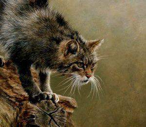 gato-silvestre-grabado