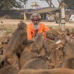 Hombre santo alimenta a cientos de monos en la India
