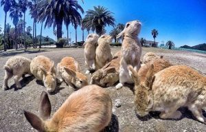 -isla-conejos-japon