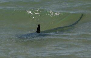 tiburon playa